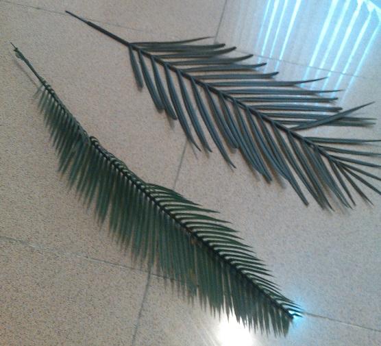 قالب برگ درخت